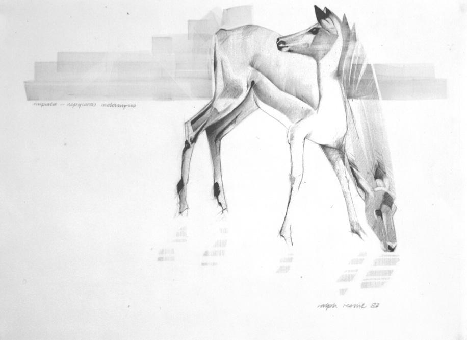 Nervous Impala by Ralph Resnik Wildlife Artist