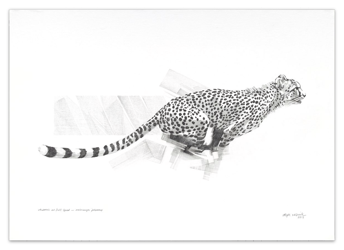"""At Full Speed"" – SOLD Pencil painting on acid-free paper; 1010 mm x 720 mm by Ralph Resnik Wildlife Artist"
