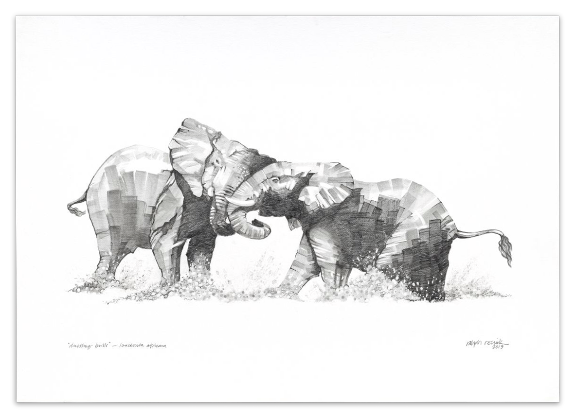 """Duelling Bulls"" – FOR SALE Pencil painting on acid-free paper; 1010 mm x 720 mm by Ralph Resnik Wildlife Artist"