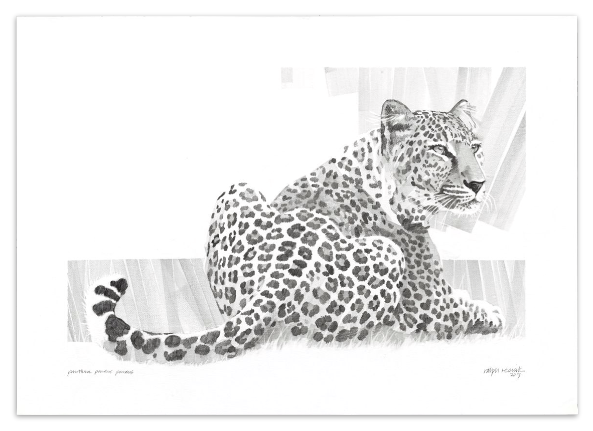 """Leopard"" – FOR SALE Pencil painting on acid-free paper; 1010 mm x 720 mm by Ralph Resnik Wildlife Artist"
