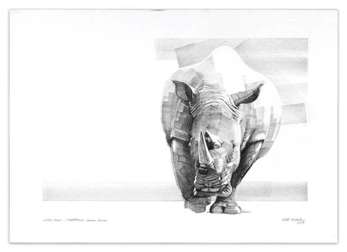 """White Rhino"" – SOLD Pencil painting on acid-free paper; 1010 mm x 720 mm by Ralph Resnik Wildlife Artist"