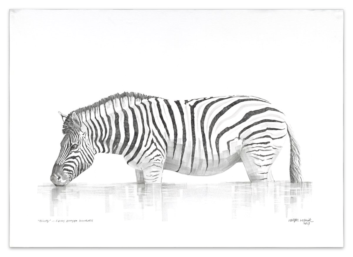 """""""Thirsty"""" – FOR SALE Pencil painting on acid-free paper; 1010 mm x 720 mm"""