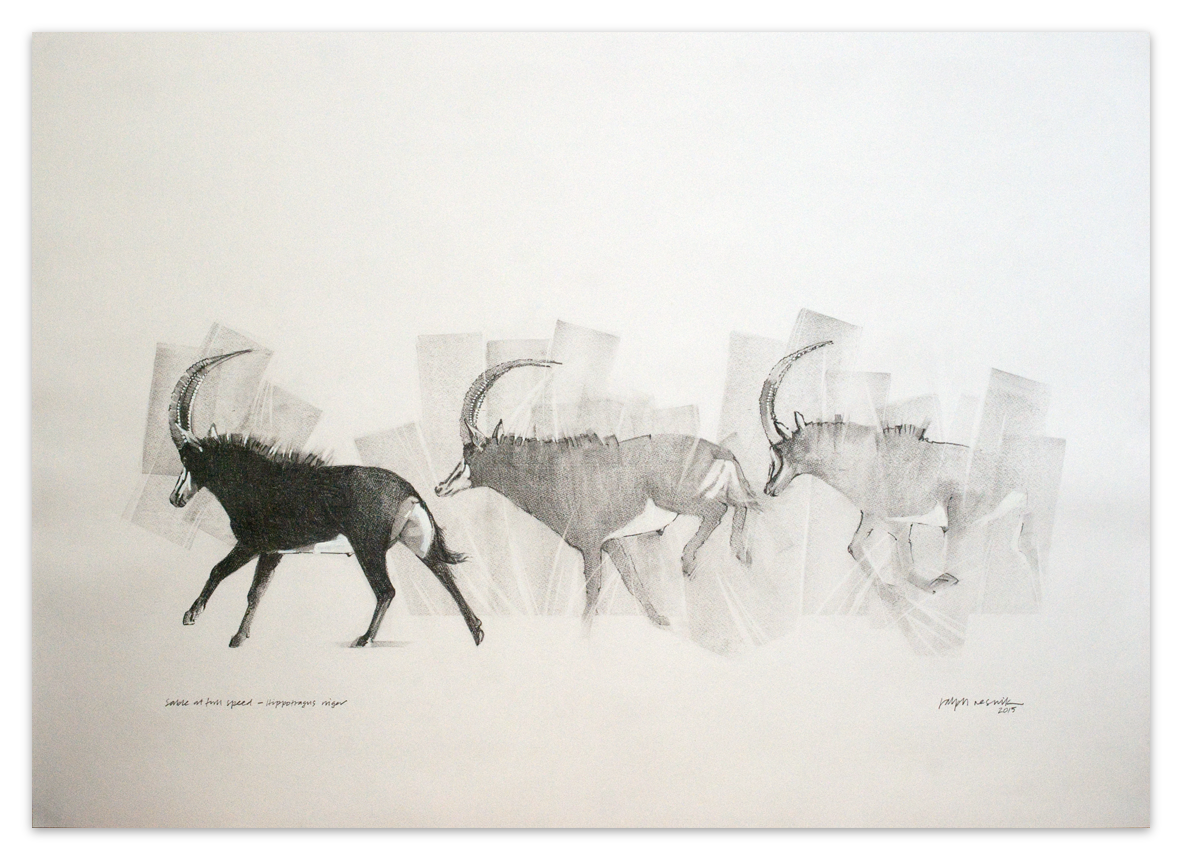 """Sable at full speed"" – FOR SALE Pencil and acrylic on acid-free paper; 1000 mm x 700 mm by Ralph Resnik Wildlife Artist"